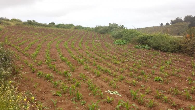Land for Sale, Galdar, LAS PALMAS, Gran Canaria - BH-7228-JM-2912 10