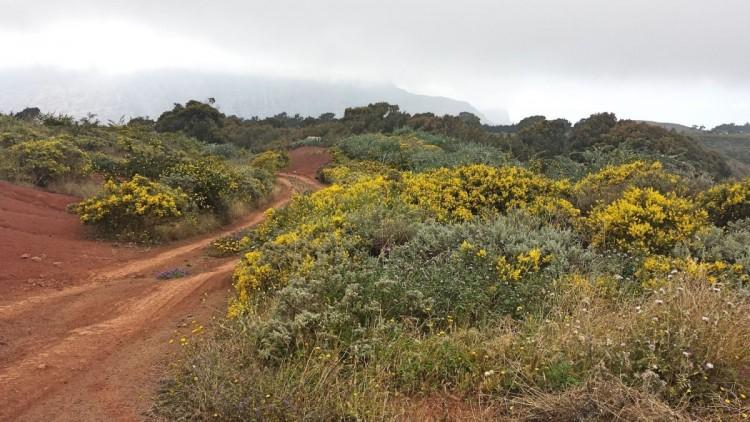 Land for Sale, Galdar, LAS PALMAS, Gran Canaria - BH-7228-JM-2912 2