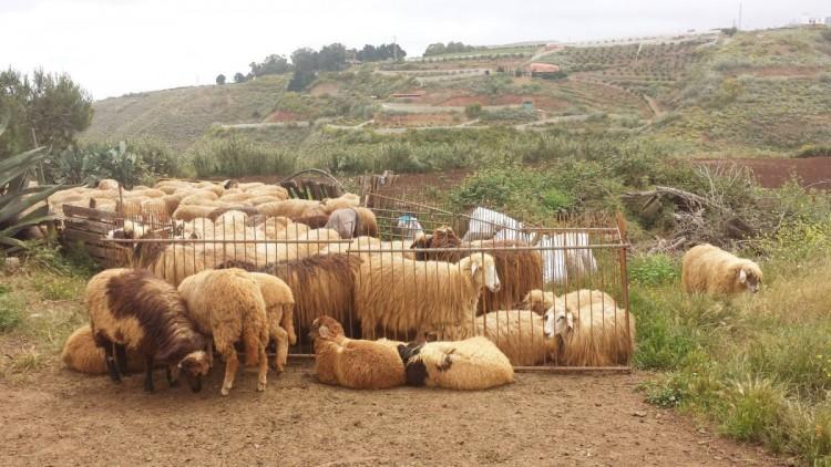 Land for Sale, Galdar, LAS PALMAS, Gran Canaria - BH-7228-JM-2912 8