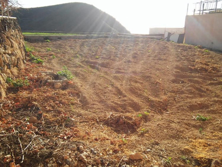 Land for Sale, San Miguel de Abona, Santa Cruz de Tenerife, Tenerife - IN-299 3