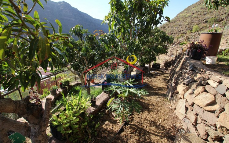 3 Bed  Country House/Finca for Sale, Arguineguin, Gran Canaria - NB-2364 3