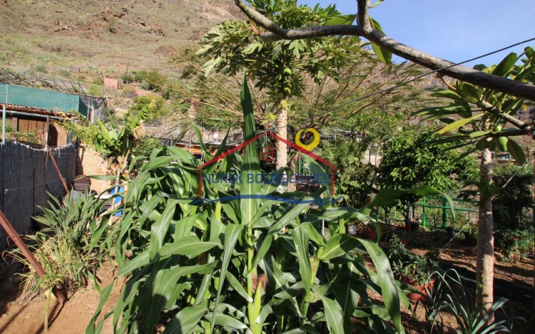 3 Bed  Country House/Finca for Sale, Arguineguin, Gran Canaria - NB-2364 4