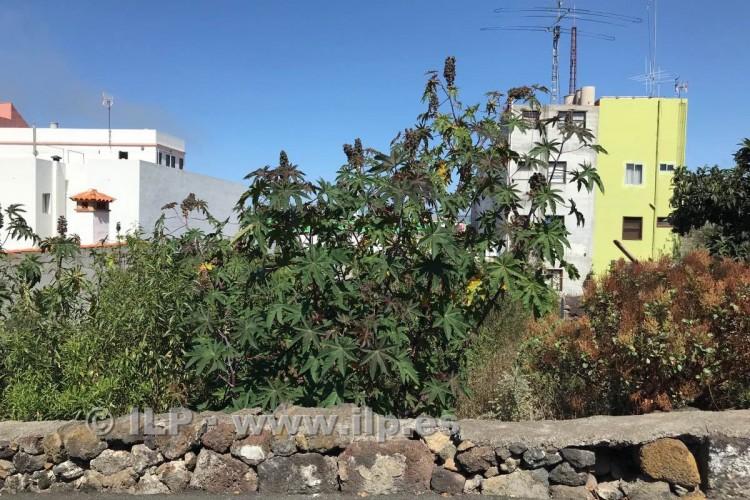 Villa/House for Sale, In the urban area, El Paso, La Palma - LP-E623 6
