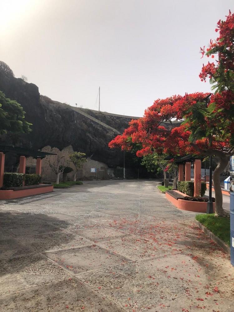 Flat / Apartment to Rent, Playa de San Juan, Guia de Isora, Tenerife - VC-6581 12