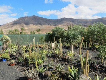 1 Bed  Country House/Finca for Sale, Puerto del Rosario, Las Palmas, Fuerteventura - DH-VPTHPTEF-99