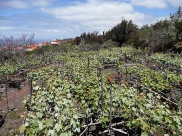 Land for Sale, La Matanza, Tenerife - IC-VTU9408 3