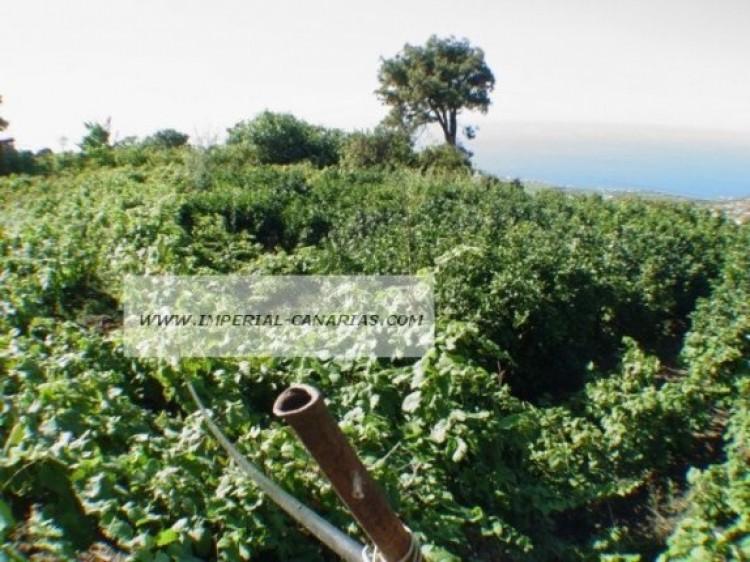 Land for Sale, La Orotava, Tenerife - IC-70513 1