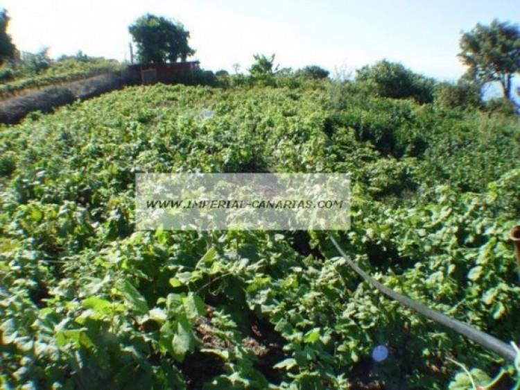 Land for Sale, La Orotava, Tenerife - IC-70513 2