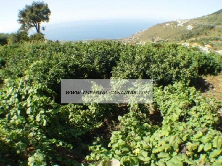 Land for Sale, La Orotava, Tenerife - IC-70513 3