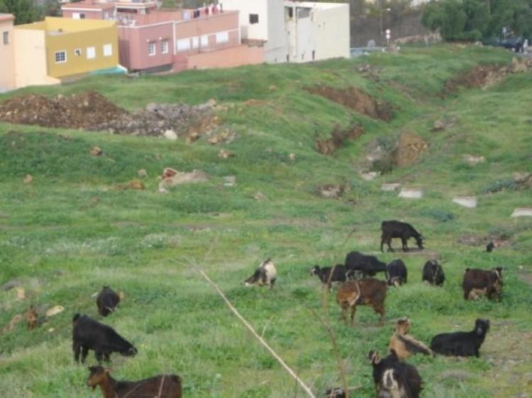 Land for Sale, La Orotava, Tenerife - IC-70495 1