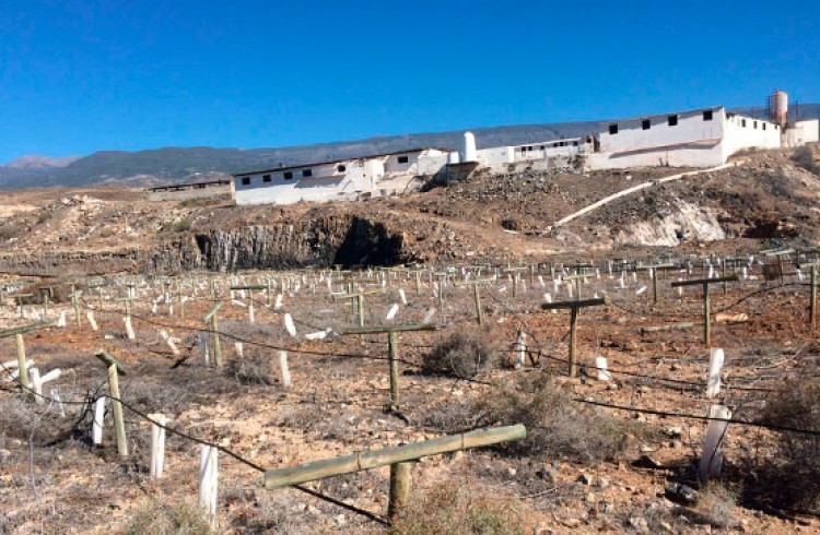 Land for Sale, Arico, Tenerife - VC-29603726 10