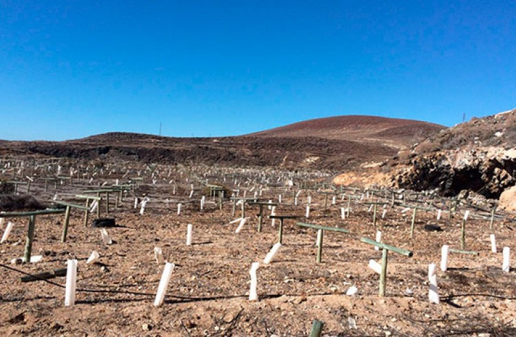 Land for Sale, Arico, Tenerife - VC-29603726 15