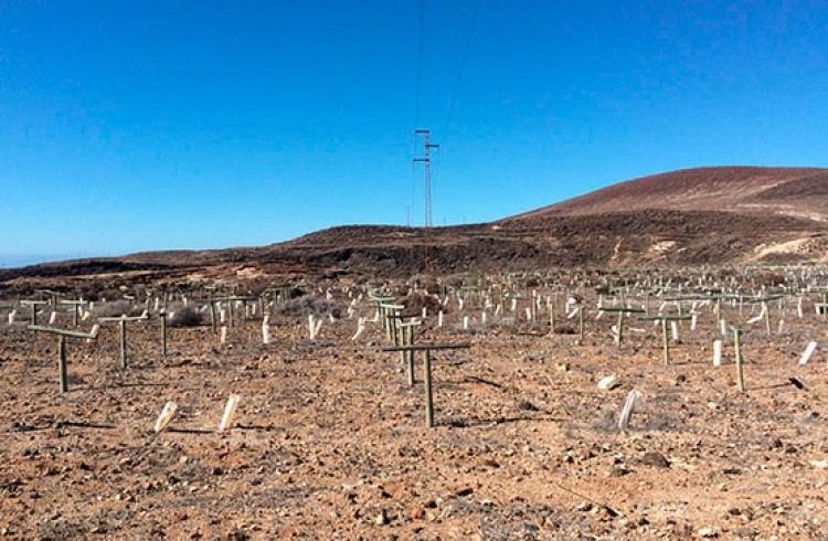 Land for Sale, Arico, Tenerife - VC-29603726 6