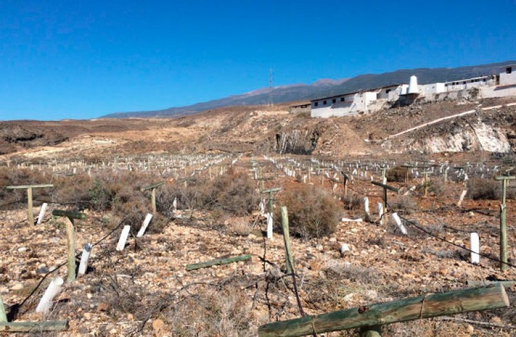 Land for Sale, Arico, Tenerife - VC-29603726 7