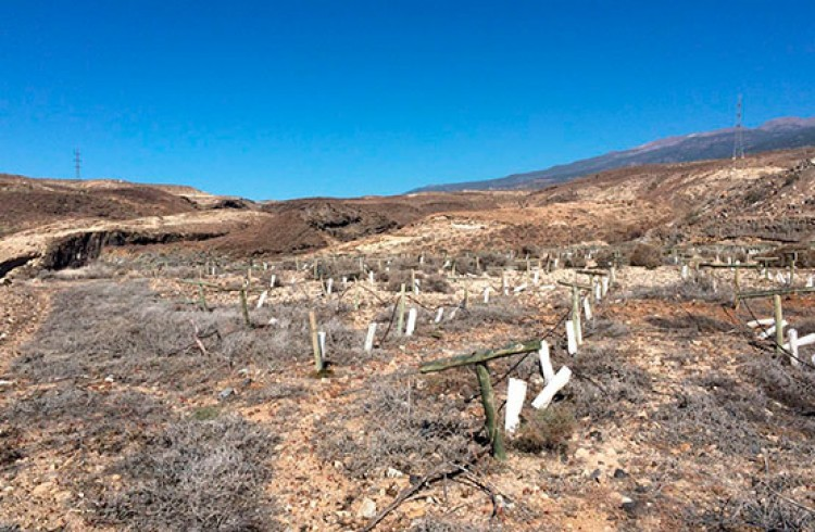 Land for Sale, Arico, Tenerife - VC-29603726 8