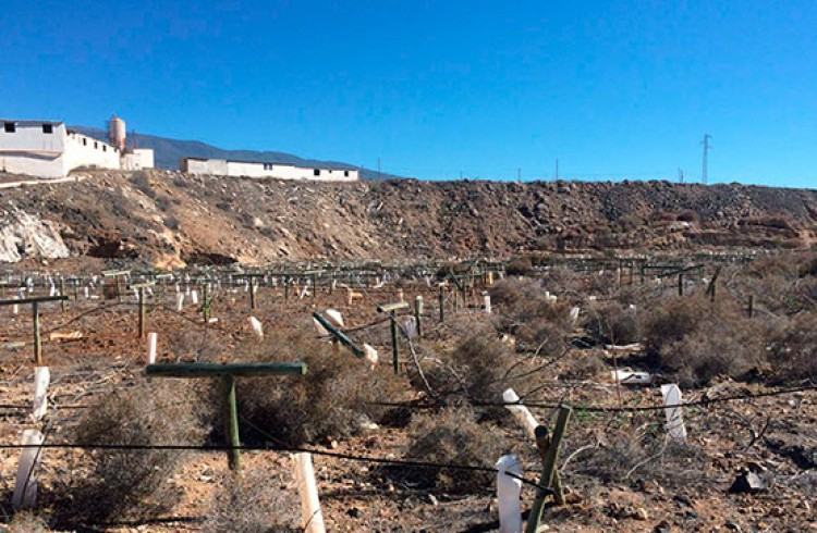 Land for Sale, Arico, Tenerife - VC-29603726 9