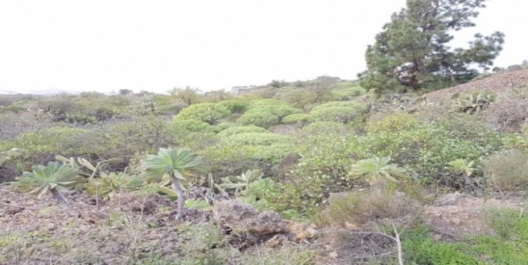 Land for Sale, Guía de Isora, Tenerife - SA-12045 7