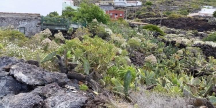 1 Bed  Land for Sale, Tamaimo, Tenerife - SA-13059 5