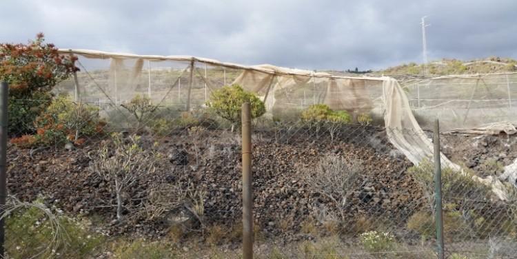 3 Bed  Land for Sale, Guía de Isora, Tenerife - SA-12041 11