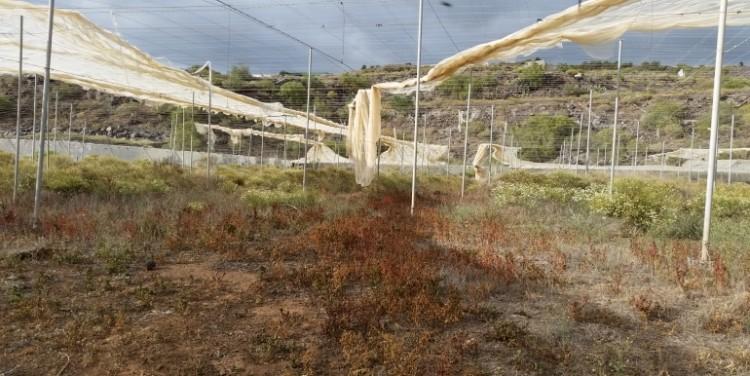 3 Bed  Land for Sale, Guía de Isora, Tenerife - SA-12041 5