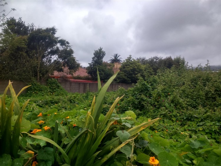 Land for Sale, San Cristobal De La Laguna, Tenerife - PG-LA113 1