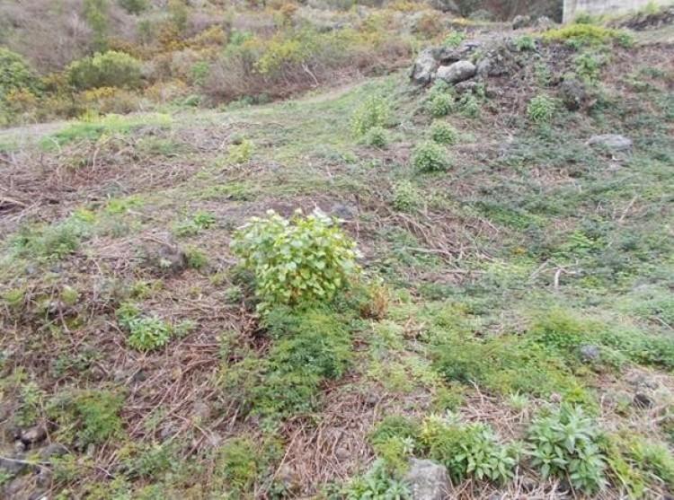 Land for Sale, El Tanque, Tenerife - PG-LA118 5