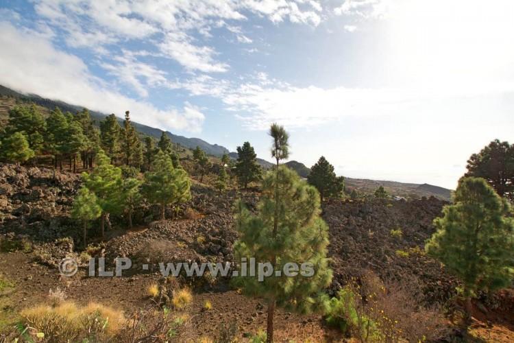 Villa/House for Sale, Tacande, El Paso, La Palma - LP-E544 11
