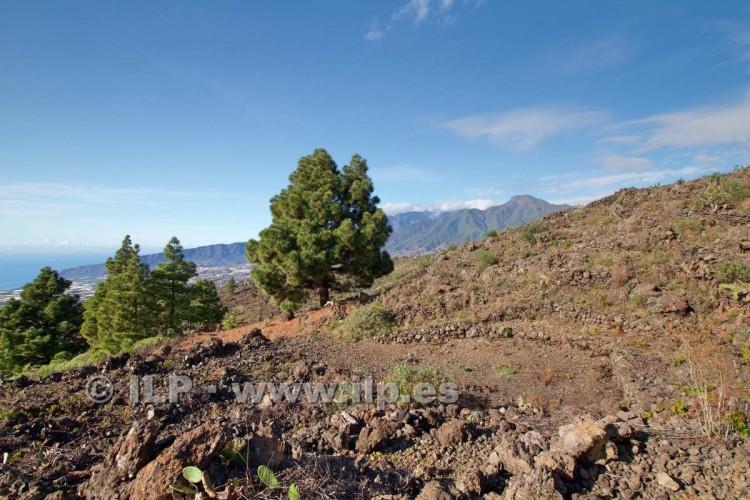 Villa/House for Sale, Tacande, El Paso, La Palma - LP-E544 17