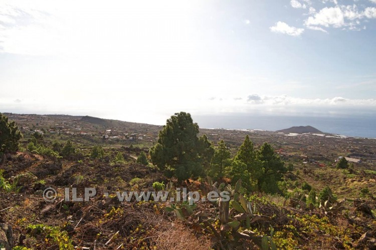 Villa/House for Sale, Tacande, El Paso, La Palma - LP-E544 5