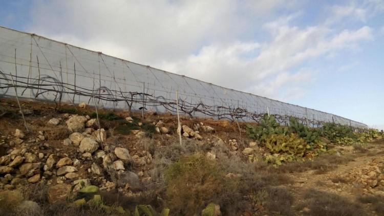 Land for Sale, Arico, Santa Cruz de Tenerife, Tenerife - IN-71 4