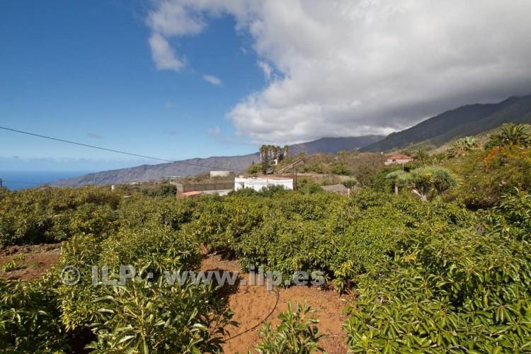 Villa/House for Sale, Tajuya, El Paso, La Palma - LP-E597 10