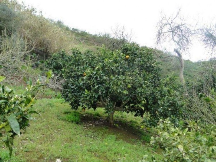 2 Bed  Villa/House for Sale, Las Palmas, Moya-Santa Maria de Guia, Gran Canaria - DI-11027 14