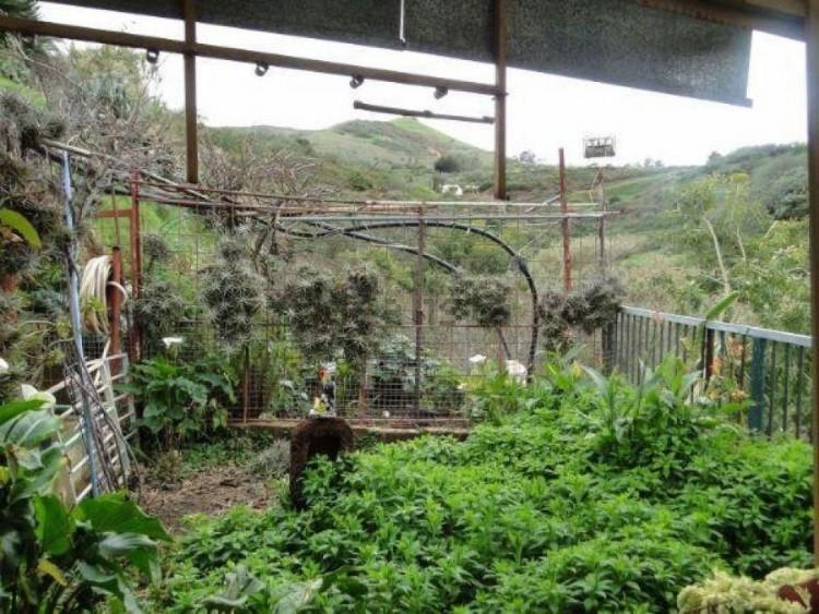 2 Bed  Villa/House for Sale, Las Palmas, Moya-Santa Maria de Guia, Gran Canaria - DI-11027 5
